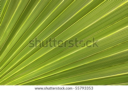 Green palm leaf close-up for a background - stock photo
