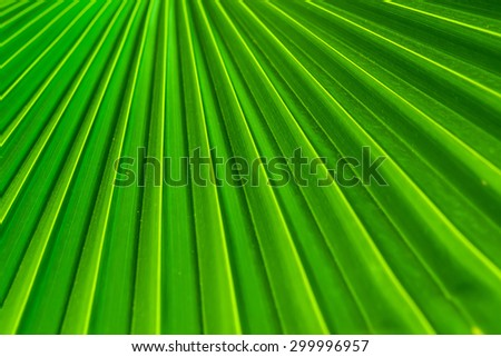 green palm leaf Depth of Field Background