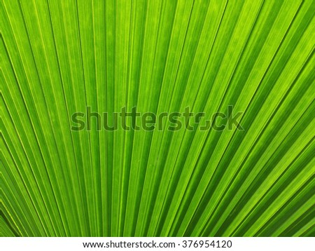 green palm leaf for background