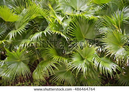green palm leaf in garden, leaves