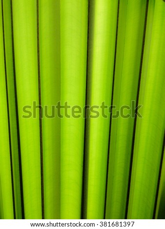 Green palm leaf  in sunlight