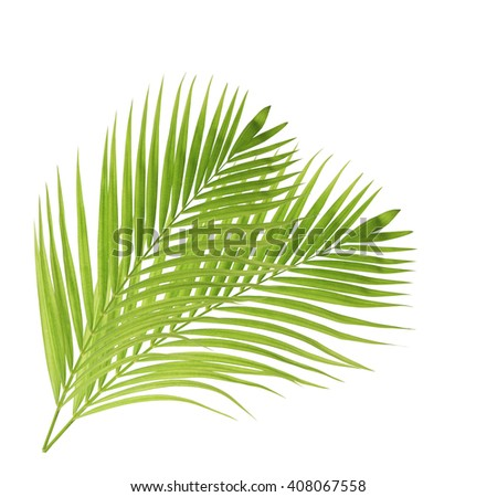Green palm leaf isolated on white background - stock photo