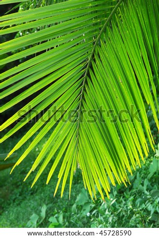 green palm leaf more in my portfolio