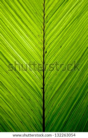 Green palm leaf pattern in the jungle backlit - stock photo