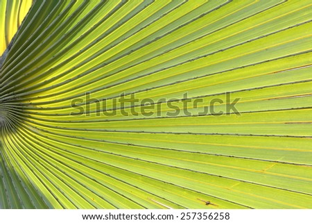 Green palm leaf surface texture background
