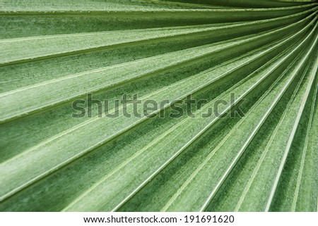 green palm leaf texture in graphic photography - stock photo