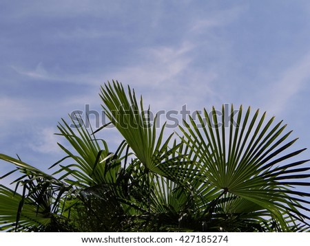 green palm leaves against a blue sky with clouds