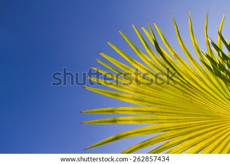Green palm leaves against blue sky. - stock photo