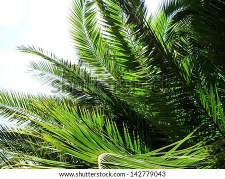 green palm leaves background