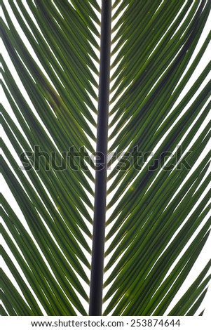 Green palm leaves isolated - stock photo