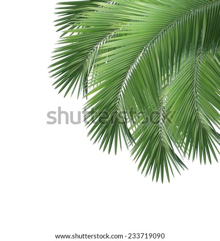 Green palm leaves isolated on white background - stock photo