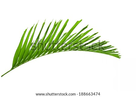green palm leaves isolated on white background, clipping path included. - stock photo