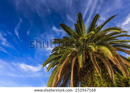 Green palm leaves on a background of blue sky - stock photo
