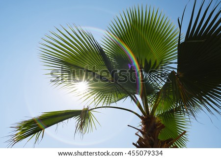 Green palm leaves on a clear blue sky. The sun and rays. Nature tropical countries. Art processing of photos. Painted rainbow - stock photo