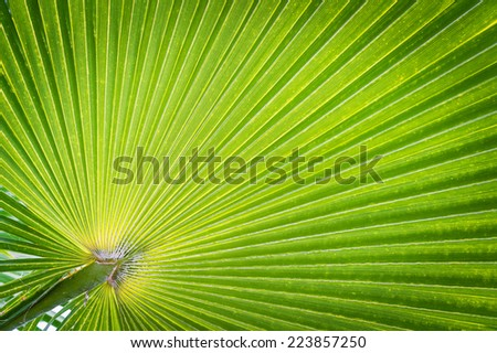 Green Palm leaves texture - stock photo