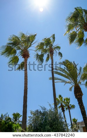 Green palm over blue sky on a sunny day