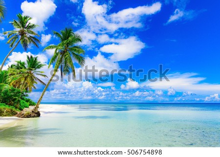 green palm shore of the Caribbean Sea on a sunny day on a background of blue sky