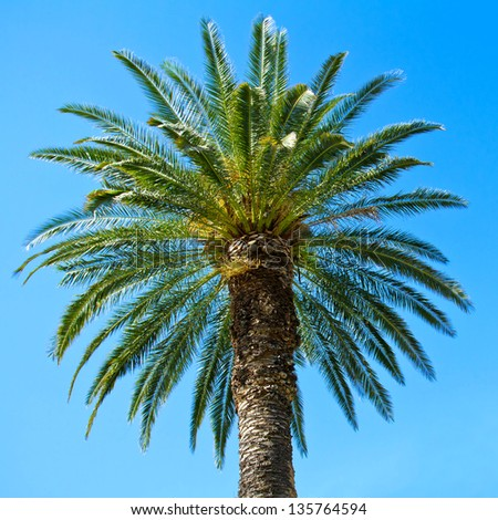 Green palm tree against blue sky background - stock photo