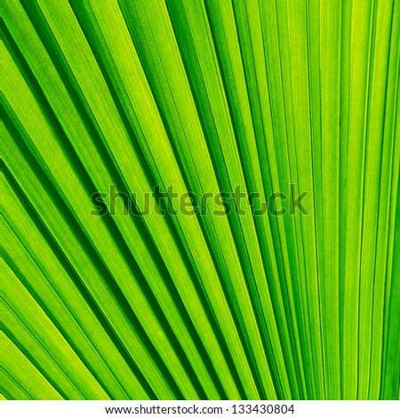 Green palm tree leaf for background
