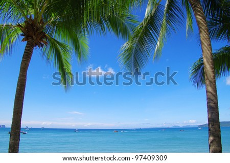 Green palm tree on blue sky background - stock photo