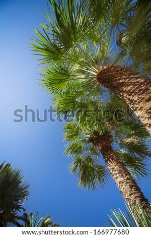 Green palm tree top over blue sky - stock photo
