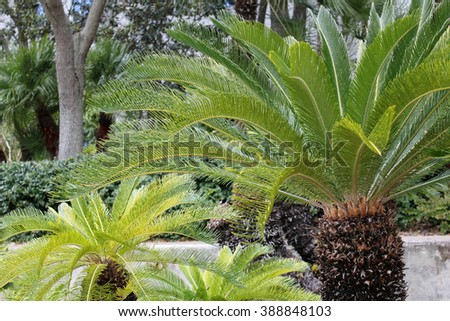 green palm trees from the jungle