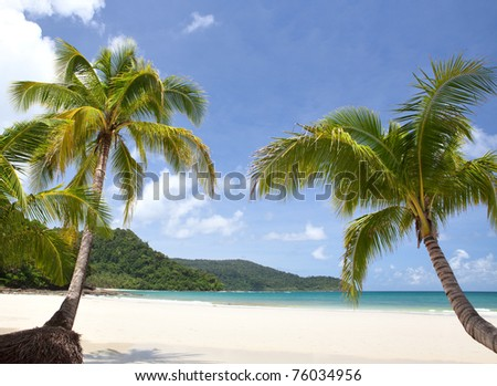 Green palm trees on exotic sandy beach