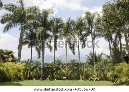 Green palms in the  Rio de Janeiro City - stock photo