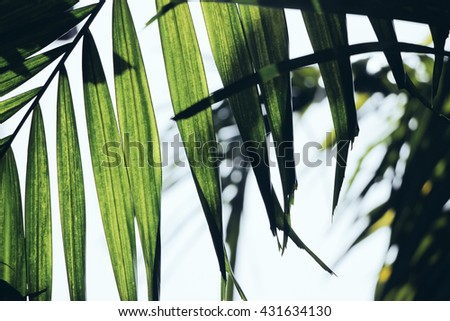 green palnts with long leaves