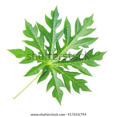 Green papaya leaf