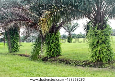 Green park area with vine covered palms on an oil company camp on Bonny Island, Nigeria