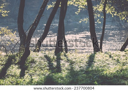 green park landscape with sun rays and shadows in the countryside - retro, vintage style look