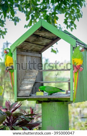 Green parrot in a cage.