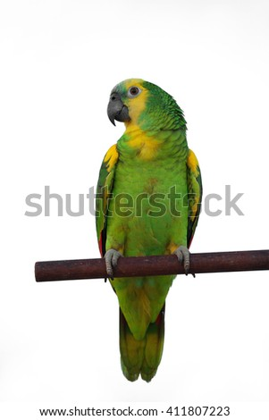 Green Parrot in Amazon