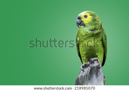 Green Parrot in Amazon on green background - stock photo