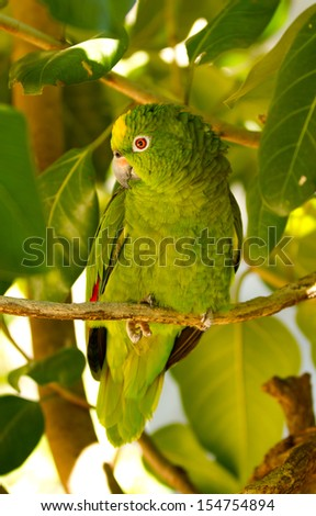 Green Parrot in Tree - stock photo