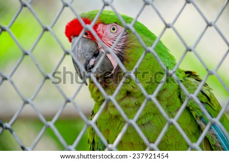green parrot is in the cage and not happy - stock photo