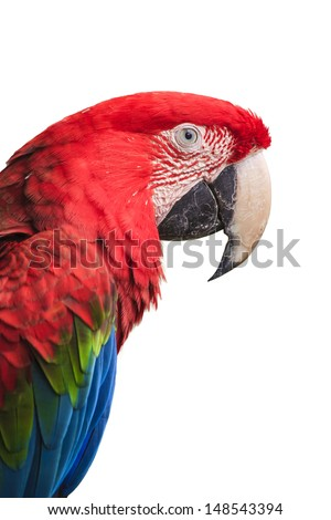Green parrot isolated over white background. - stock photo
