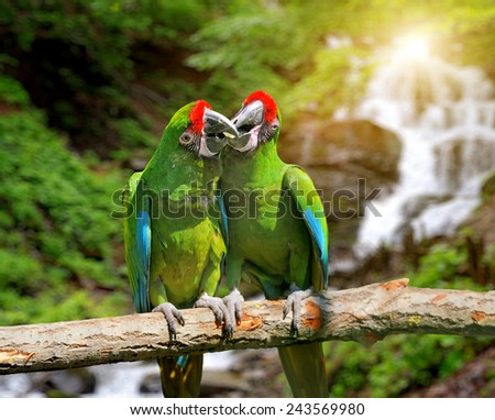 Green Parrot (Severe Macaw) against tropical waterfall background - stock photo