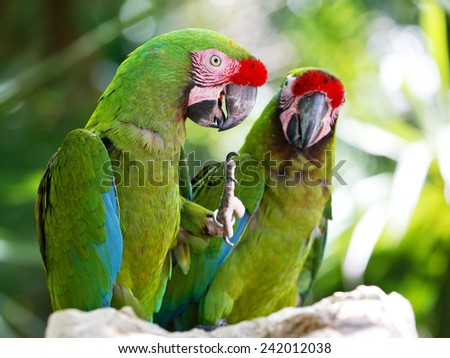 Green parrots - stock photo