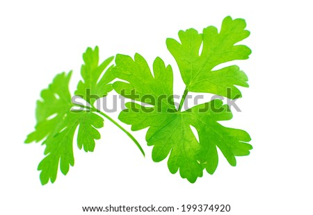 green parsley isolated on white background
