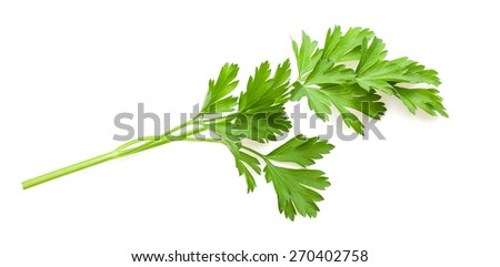 green parsley sprig isolated on white background - stock photo