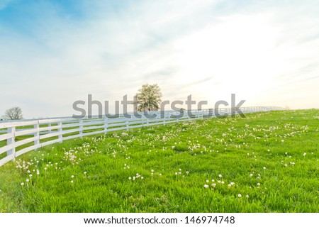 Green pastures of horse farms. Country spring landscape. - stock photo