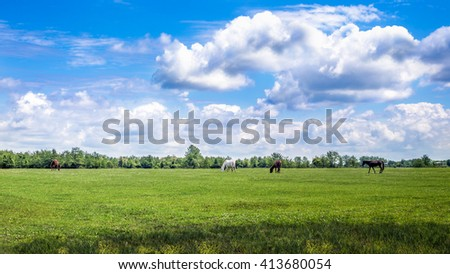 Green pastures of horse farms. Country spring landscape. Georgia. - stock photo