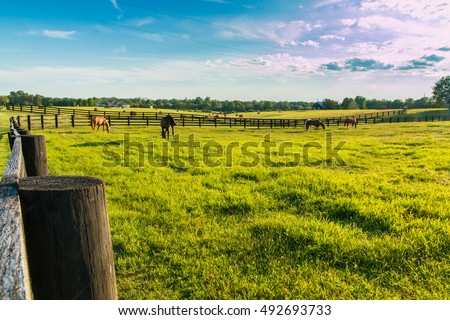 Green pastures of horse farms. Country summer landscape at evening golden hour.