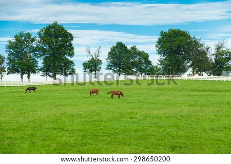 Green pastures of horse farms. Country summer landscape. selective focus