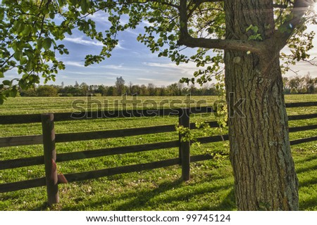 Green pastures of  horse farms. HDR image - stock photo