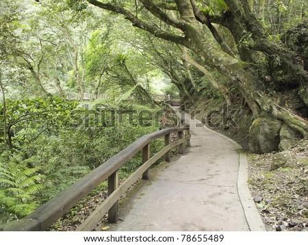 Green path - stock photo