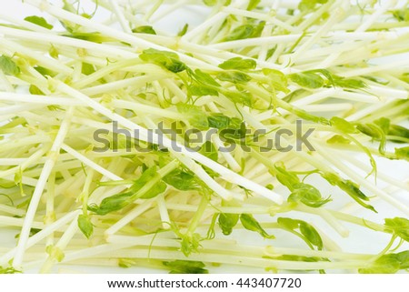 green pea sprouts, fresh green pea sprouts, Snow Pea Sprouts on White Background - stock photo