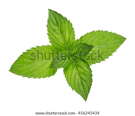 green peppermint herb leafs isolated on white background